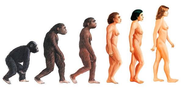 Эволюция человека, рис. David Gifford