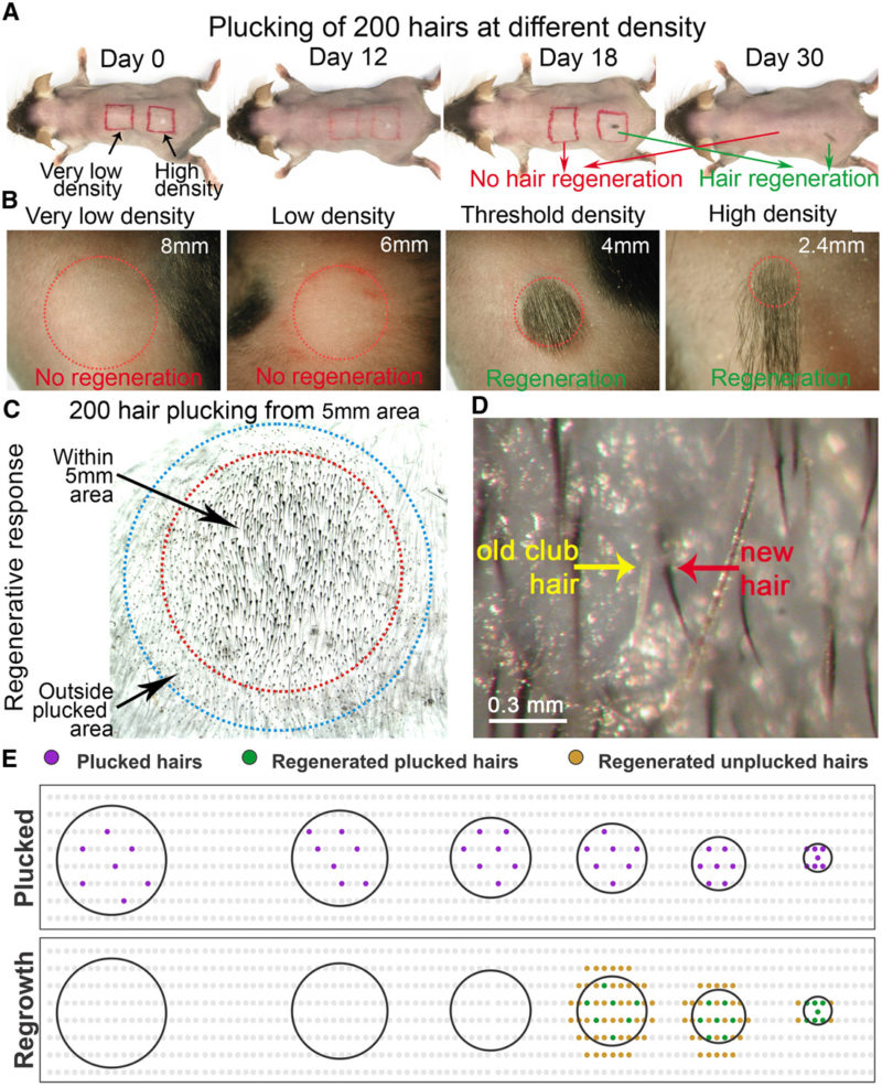 Иллюстрация из исследования группы профессора Ченг-Минг Чуонга
