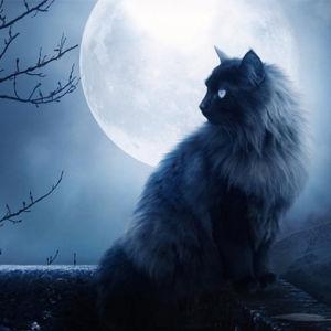 Вера в связь человека и луны не лучше веры в то, что черная кошка способна принести несчастье.